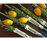 Lulav and Etrog Sets
