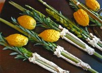Lulav and Etrog Set - (Arba Minim) Kosher